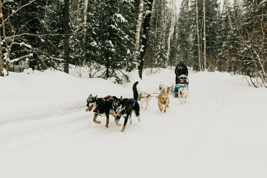 Dogsled 227