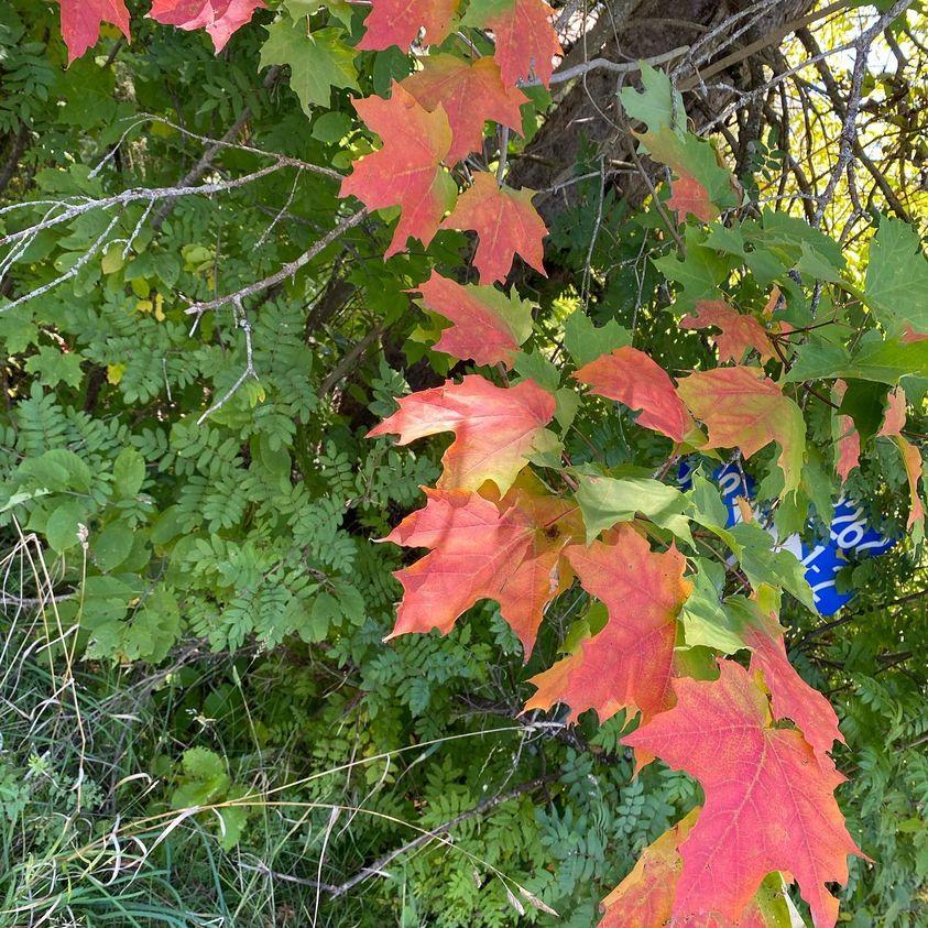 fall leave colour